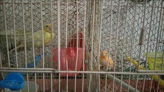 81c2fb0ca77d Χύμα Σπίτι -Κήπος -Κατοικίδια -Ζώα Κατοικίδια Ζώα - Άγνωστο Χωρίς ...