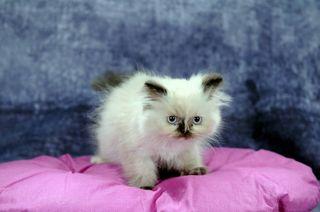 adfdd62dd33a Χύμα Shop Σπίτι - Κήπος - Κατοικίδια - Ζώα Κατοικίδια Ζώα Γάτες ...