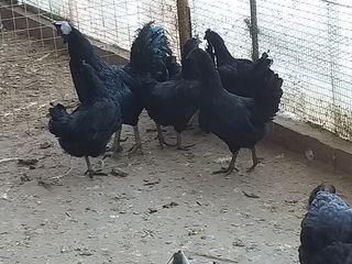 μαύρο παχουλός πορνό