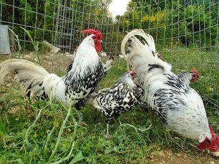 μεγάλο πουλί σφιχτό γαϊδούρια ελεύθερα πορνό Ασιάτης/ισσα com